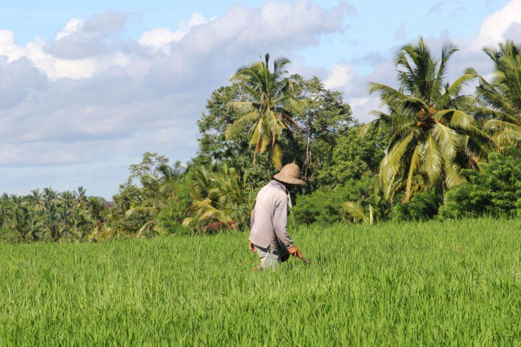 Камбоджа: рисовые поля на блокчейне от Oxfam